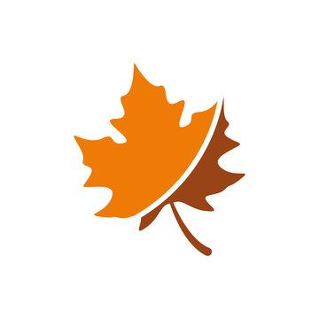 maple leave logo design vector