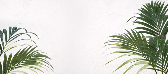 Fresh green tropical palm fronds border. Kentia palms leaves over white wall background Wall mural
