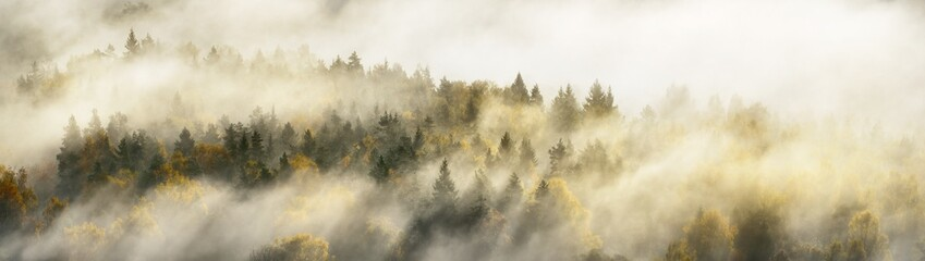 Fotobehang Herfst Breathtaking panoramic aerial view of the colorful golden mixed coniferous forest and river in a clouds of fog at sunrise. Stunning autumn landscape. Picturesque scenery. Pure nature, travel, tourism