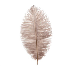 Fluffy ostrich feather on the white background