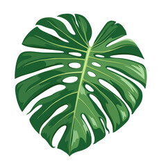 Monstera Deliciosa leaf vector, realistic design isolated on white background, Eps 10 illustration