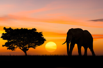 Silhouette elephant standing nearly big trees in safari with beautiful sunset twilight sky background Papier Peint