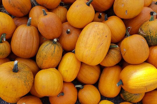 Pumpkins at outdoor farmers market. Autumn season.