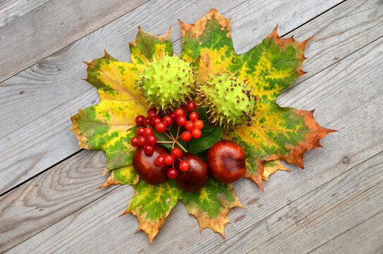 Background of autumn, leaves, horse chestnuts and rowanberry on old wooden table.