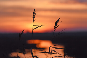 Sunset over marshy area in the Netherlands