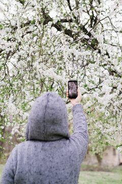 Woman taking image of blossoming cherry tree