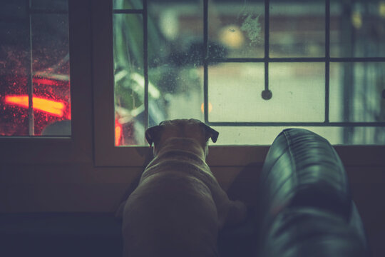 Sad cute pug dog puppy is sit and waiting owner at the windows for come back home from working to bring outside for walking and playing.