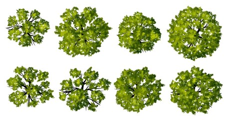 set of green leaves isolated, Set of watercolor tree top view for landscape plan and architecture layout