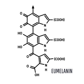 Eumelanin chemical molecule structure on white background