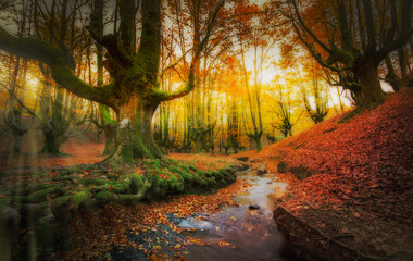 Autumnal image of the magic forest of otzarreta, in Basque Country, Spain
