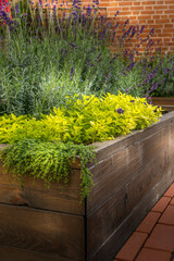 Raised beds in an urban garden growing plants flowers, herbs spices and berries