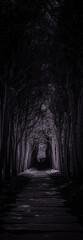 dark forest pathway scene