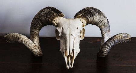 ram skull with big horns on wooden desk Papier Peint