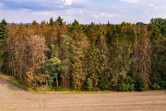 Luftbild von kranken Bäumen im deutschen Wald als Auswirkung der andauernden Trockenheit