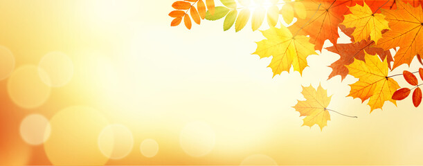 Autumn banner with leaves on sunlight