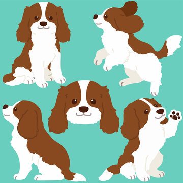 Set of flat colored Brown Cavalier King Charles Spaniel illustrations