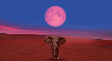 "African elephant walking on the sand dune with lunar eclipse ""Elements of this image furnished by NASA"""