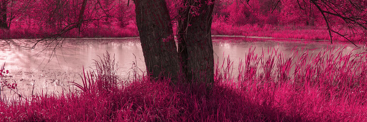 tree trunk on the background of a lake and grass in the infrared spectrum. Web banner.