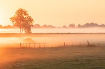misty sunrise on Dutch farmland with hare and hawk