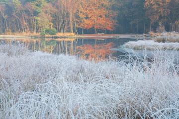 autumn forest in sunrise light and frozen grass around lake