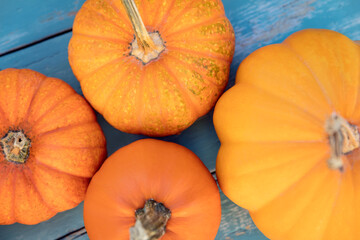 Flatlay, different sorts of pumpkins on blue wodden table