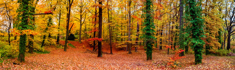 Panoramic view of deciduous forest at golden Autumn colors during warm sunset