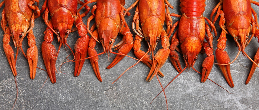 Delicious boiled crayfishes on grey table, flat lay. Banner design