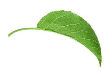 Apple leaf closeup