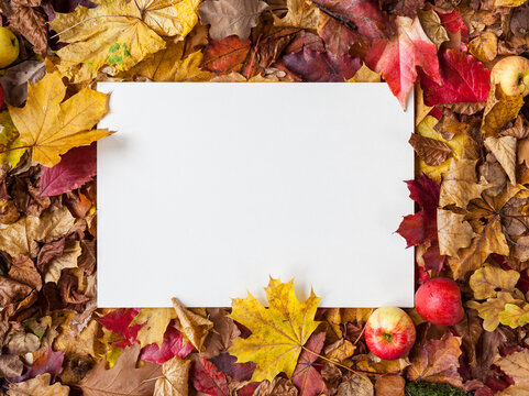 White A4 sheet of paper lying horizontally in front of an autumn composition with colorful leaves and autumnal decoration design thanksgiving festivity invitation letter sale social media marketing