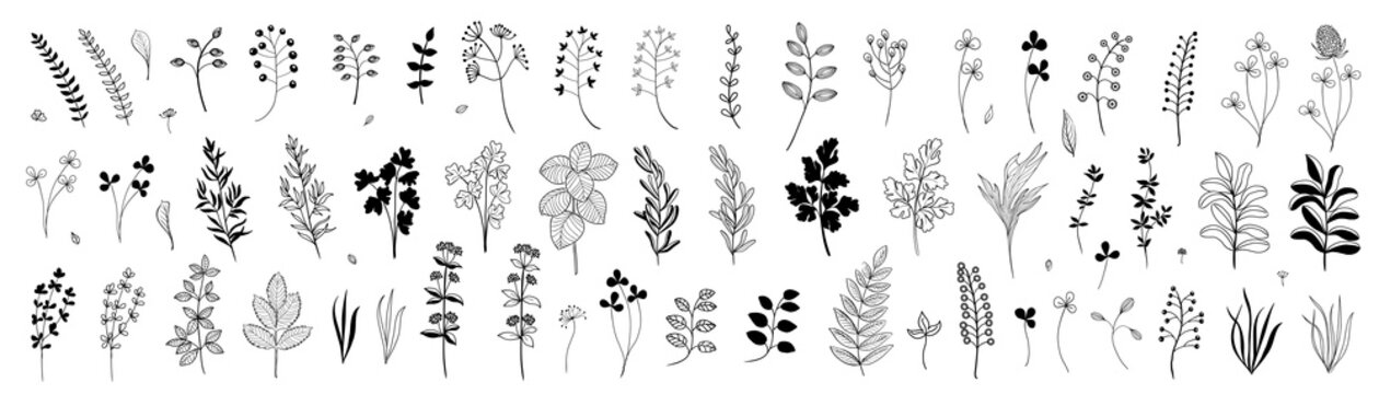 Set of hand drawn plants, leaves, flowers. Silhouettes of natural elements for seasonal backgrounds, templates, wallpaper, cards, banners. Modern design. Doodle style. Contemporary trendy vector icons