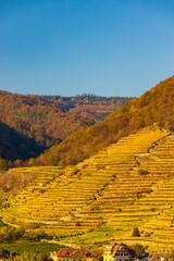 autumn vineyard in Wachau region, Austria