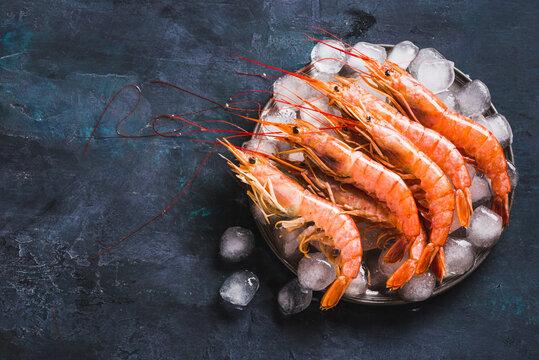 Argentine shrimps ocean jumbo shrimps on dark background copy space.