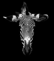 Wall Murals Zebra Zebra head isolated