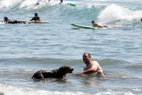 A man plays with his dog in the water on the record heat wave, at Venice Beach in Los Angeles