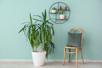 Interior of modern room with green houseplants and chair