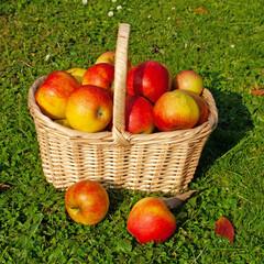 Äpfel im Korb auf einer Wiese