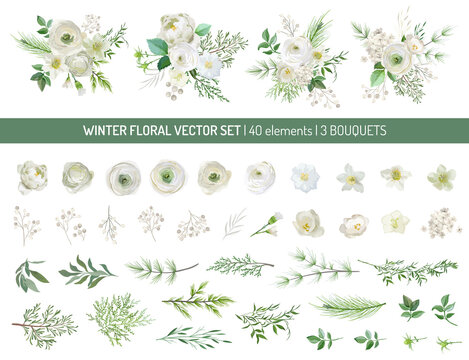 Elegant Evergreen pine branches, pale rose, white hydrangea, ranunculus flowers, eucalyptus, rowan berry, greenery leaves, floral elements.Trendy winter bouquetes.Vector isolated illustration set