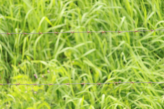 barbed wire on a background of green grass