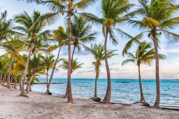 Anse Chamapgne beach in Guadeloupe