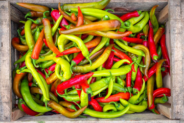 Multicolored pods of bitter pepper. Chili pepper. Bitter pepper in a wooden box. Agricultural background with vegetables. Harvest. Sale of vegetables. Agricultural business.