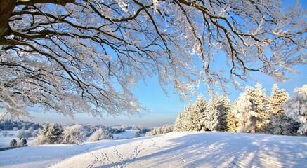 Paysage recouvert de neige, arbres, neige, hiver, ciel,froid