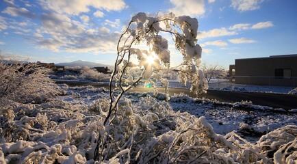 Printed roller blinds London Lever de soleil en hiver, neige, paysage enneigée
