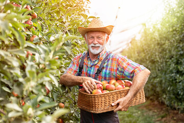 Smiling farmer in apple orchard