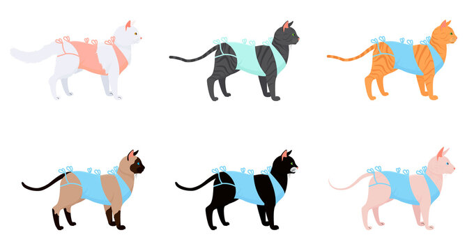 cat in bandage after surgery set. cartoon cats different breeds after neutering isolated on white