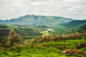 Kerala, India. Tea plantations in Munnar, Kerala