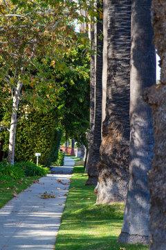 California Sidewalk palms