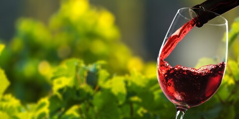 Red wine and glass on vineyard background