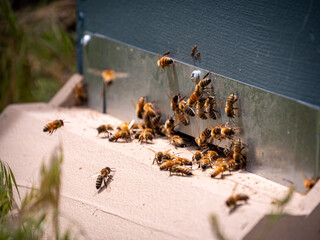 Wall Murals Bee Bees flying in and out of bee hive with soft focus background