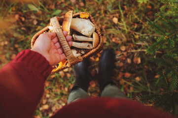 picking wild mushrooms in autumn forest. Hand holding basket full of mushrooms, lifestyle shot.