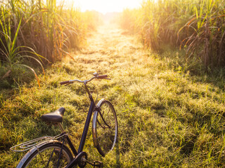 Bicycle on Field landscape Outdoor park Morning sunrise leisure lifestyle